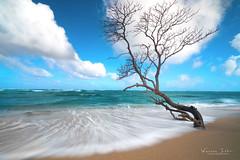 STEADFAST (BlindSides) Tags: tide coastal shoreline sandybeach lonetree beach surf wave hawaii steadfast