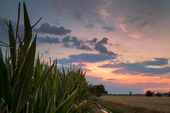 The sun dives into the clouds (PhotoChampions) Tags: sunset sonnenuntergang landscape landschaft rural ländlich clouds wolken sky himmel schleswigholstein germany deutschland gammerweg horizon horizont