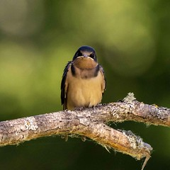 birds-4 (stevejordan56) Tags: nisqually birds