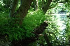 DSC01049 (g.lebloas) Tags: forêt bois arbre eau