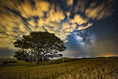 _MG_9677-Editar (marcmarcoripoll) Tags: via naturephotography vialactea milkyway night noche nocturna clouds stars tree
