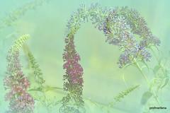 Collage124-001  summer floral fantasy (profmarilena) Tags: artwork floralfantasy summerfloralfantasy profmarilena