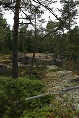 A walk in the woods (liisatuulia) Tags: metsä porkkala dilojun2018