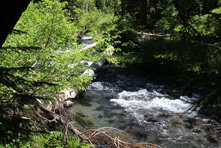 The Rogue flows through dense vegetation