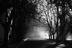 (Walter Daniel Fuhrmann) Tags: niebla fog bw blancoynegro bn calle street árboles trees gente people
