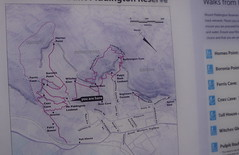 Mt Victoria  walking tracks map (spelio) Tags: mt victoria nsw blue mountains australia winter bushwalk hike