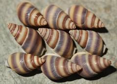201/365 Shells (Helen Orozco) Tags: shells 201365 seashells 2018365 nine 3x3 shape