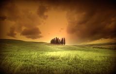 Cipressi. (Enzo Ghignoni) Tags: campi cipressi erba cielo nuvole colline case