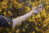 How It's All Held Together (Miss Marisa Renee) Tags: marisarenee digital canon canon5dmarkii colorado spring spring2018 april april2018 2018 yellow yellowflowers flowers blossoms floral string strung creative fineartphotography photoset photoseries hand arm sleeve background monochrome