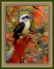 Every day is an opportunity to make a new happy ending.  (Author Unknown) (boeckli) Tags: kookaburra birds vögel tiere animals outdoor leaves bunt farbig farbenfroh textures texturen texture textur ddg deepdreamgenerator photoborder animal bird 07052
