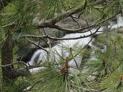 Eagle Falls through the pines (JJP in CRW) Tags: waterfalls pines emeraldbay california