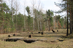 Great Escape camp - Remains of the Hospital Area (big_jeff_leo) Tags: german camp pow ww2 secondworldwar escape greatescape stalag