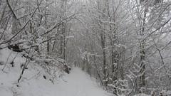 Haie d'honneur (ViveLaMontagne67) Tags: france vosges grandfaudé forêt arbres branches neige brouillard hiver blanc white winter fog snow tress forest path sentier