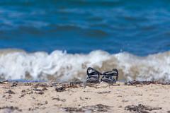 Summer holidays! 🌞 (JanMNielsenPhoto) Tags: summer holidays beach sunshine sea coast visitdenmark opdagdanmark viewbug waves denmark danmark danishsummer iamnordic nikon nikonphotography d7200 sandals sand