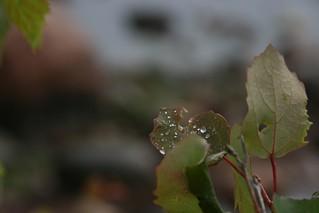 pärast vihma / after rain