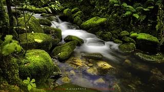EL VIAJE DEL AGUA X  //the water trip