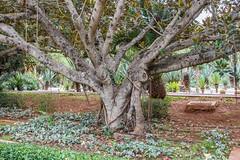 _DSC4855 (BasiaBM) Tags: botanical gardens rabat morocco
