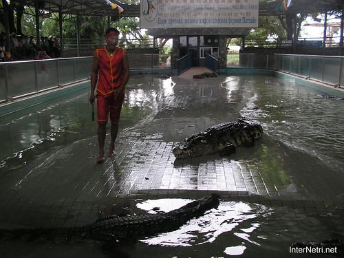 В пащу крокодилу Паттайя Таїланд Thailand InterNetri 08
