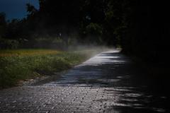 After the rain (sumo4fun) Tags: magdeburg germany rain sumo4fun mist nebel regen summer day