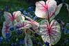Botanical Garden, Lakeland FL (Edward Mitchell) Tags: on1raw nikon1 nikon1j5 flowers leaves botanicalgarden