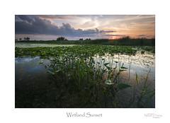 Wetland Sunset (baldwinm16) Tags: il illinois bog clouds dusk habitat lilypad marsh midwest nature naturepreserve outdoors outside reflection shoreline sky slough sunset swamp twilight water wetland natureofthingsphotography omot