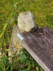P1100444 Marmot-Bench /Murmeltier-Bank im Garten der Naturschutzakademie (Traud) Tags: germany bavaria deutschland bayern bank bench marmot murmeltier