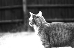 (von8itchfisk) Tags: contrast highcontrast 35mm blackandwhite monochrome selfdeveloped olympus om10 vonbitchfisk washi cat film filmisnotdead ishootfilm analog