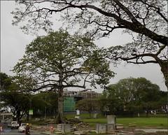Sarawak Kuching Padang Kapok 20180117_085847 DSCN1619 (CanadaGood) Tags: asia asean seasia malaysia borneo sarawak kuching building traffic tree canadagood 2018 thisdecade color colour