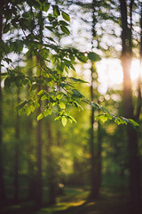 #236 - In the forest... / V lese... (photo.by.DK) Tags: helios helios103 helios1035318 helioslens russianlens russian bokeh bokehlicious bokehful sonya7 sonyilce sony sonyalpha sonya7ii oldlens legacylens manuallens manualfocus manual manualondigital vintage vintagelens visualpoetry artbydk photobydk depthoffield wideopen wideopenbokeh shotwideopen contax contaxrf contaxkiev