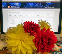 Thank you! (julesnene) Tags: 5millionviews california canon1635mmf4lisusm canon5dmarkiv flower happy4thofjuly juliasumangil dahlia flora julesnene thankyou dahlias