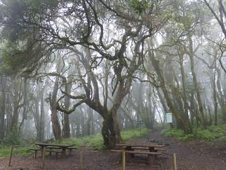 Garajonay Nemzeti Park köderdője