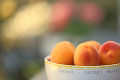 Summer fruit (eleni m) Tags: fruit summer apricot apricots bowl garden backyard tabletop food colours bokeh dof stilllife macro