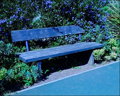 Blue bench (violetchicken977) Tags: benchmonday blue ceonothus californianlilac pannettpark whitby