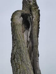 Westchester, IL, Wolf Prairie Nature Preserve, Tree Trunk (Mary Warren 11.0+ Million Views) Tags: westchesteril wolfprairienaturepreserve park nature flora plants prairie tree bark trunk