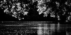 LAKE (MAICN) Tags: 2018 water bw wasser blackwhite monochrome landschaft nature schwarzweis landscape mono lake einfarbig sw natur see