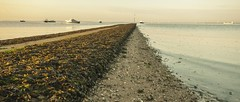 Essex Southend (daveknight1946) Tags: essex southend lowtide boats seaweed path kent