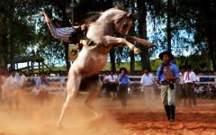 Negrinho e Payador de La Encimera (Eduardo Amorim) Tags: gaúcho gaúchos gaucho gauchos cavalos caballos horses chevaux cavalli pferde caballo horse cheval cavallo pferd pampa campanha fronteira quaraí riograndedosul brésil brasil sudamérica südamerika suramérica américadosul southamerica amériquedusud americameridionale américadelsur americadelsud cavalo 馬 حصان 马 лошадь ঘোড়া 말 סוס ม้า häst hest hevonen άλογο brazil eduardoamorim gineteada jineteada
