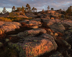 Skuleskogen Nationalpark VII (Gustaf_E) Tags: forest högakustenbron kväll landscape landskap ljung nationalpark pine pines skog skuleskogen skuleskogennationalpark sommar sverige sweden tall woods ångermanland
