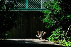 neko-neko2157 (kuro-gin) Tags: cat cats animal japan snap street straycat 猫 canon powershot pro1