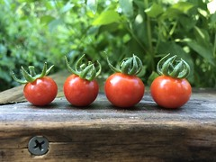 Garden Perfect (BeaLeiderman) Tags: salad iphonex tiny summer fruit red cherry garden tomato