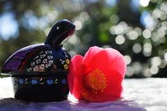 a black turtle (Bl.Mtns.Grandma) Tags: smileonsaturday blackbeauty turtle vanuatu souvenir camellia
