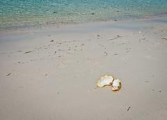 DSC_0121 (yakovina) Tags: silverseaexpeditions indonesia papua new guinea island auri islands