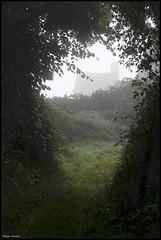 Nuillé le Jalais (Sarthe) (gondardphilippe) Tags: nuillélejalais sarthe maine paysdelaloire chemin brume arbres photographie photography randonnée extérieur outdoor green haie landscape paysage maison nature quiet rural ruralité trees vert texture zen