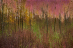 untitled75 (Valeria Rossi Brichese) Tags: paynterly trees colors italy icm multiexposure