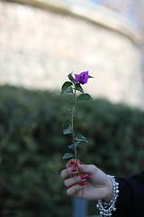 Foco Diferenciado_04 (LeoPeci-Foto) Tags: cfq focodiferenciado puertomadero flores