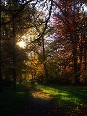 Schein (Elmar Egner) Tags: hasselblad x1d 90mm trees light shine park no people sunshine love forest woods path
