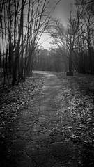 The Path 3 (Jeffery Womack) Tags: 2018earylyspring mayburystatepark michigan blackandwhite dramaticmonochrome forestpathway hikingtrails monochrome nature novi samsunggalaxy8plus smartphonephotography water
