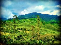 Brinchang, 39000 Brinchang, Pahang https://goo.gl/maps/DMdpmhZBBAm  #大自然 #nature #自然 #طبيعة #자연 #Alam #природа #ธรรมชาติ #金马仑 #CameronHighland #travel #holiday #traveling #trip #Asian #Malaysia #旅行 #度假 #亞洲 #馬來西亞 #วันหยุด #การเดินทาง #ホリデー #휴일 #여행 #праздни (soonlung81) Tags: trip cameronhighland طبيعة 自然 วันหยุด путешествие malaysia 휴일 馬來西亞 alam 旅行 馬來西亞旅行 nature природа ธรรมชาติ 여행 asian 大自然 度假 traveling 金马仑 자연 ホリデー การเดินทาง праздник holiday travelmalaysia 亞洲 travel