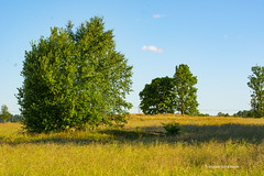 summer evening (Flodina) Tags: d7100 nikon evening field summer sweden sun trees rock grass bluesky blue cloud