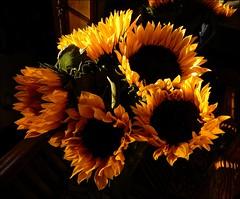 Evening Sun (Nanny Bean) Tags: sunflowers backlit eveningsun